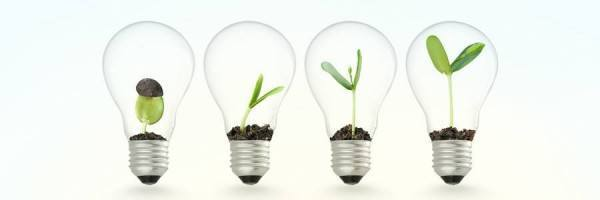 Plant growing in lightbulb , ideas growth concept
