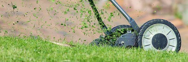 Manual lawn mower in action.