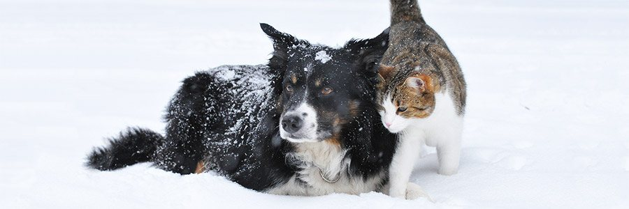 A cat and a dog cuddling in the snow.
