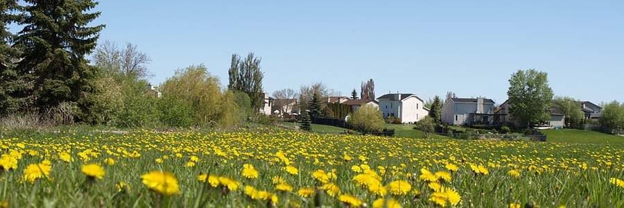 prairie landscape with yellow flowers, Winnipeg Manitoba