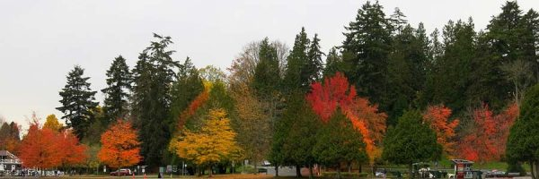 Trees with varied fall colours